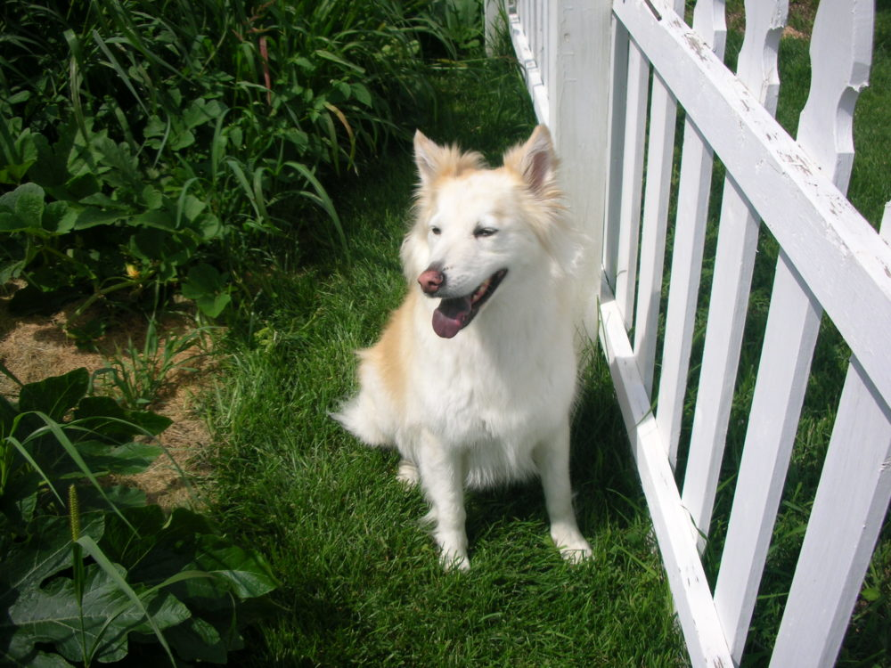 Kaiya smiling in the garden. Dogs are family too.
