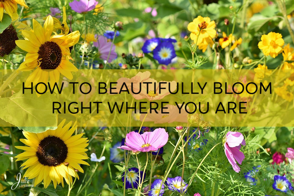 How To Beautifully Bloom, Right Where You Are