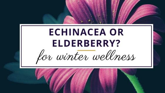 echinacea flower for winter wellness