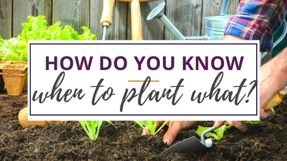 a person who knows when to plant vegetables digging in the soil to put in carrots
