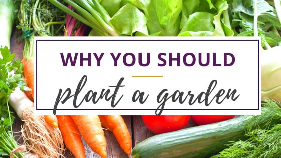 carrots, tomatoes, lettuce, and cukes are good reasons for why you should plant a garden
