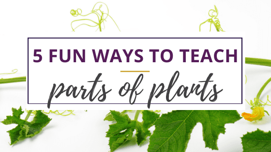 parts of plants for kids with closeup of leaves