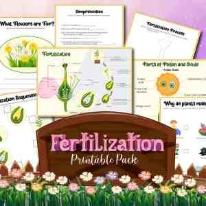 Plant Fertilization Printables Pack