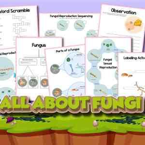 Fungi Printables Pack