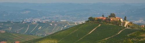 Vignoble de Il Bricco - Treiso (Barbaresco) - Pio Cesare