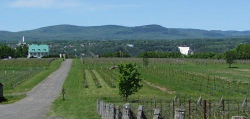 Vignoble de Sainte-Pétronille