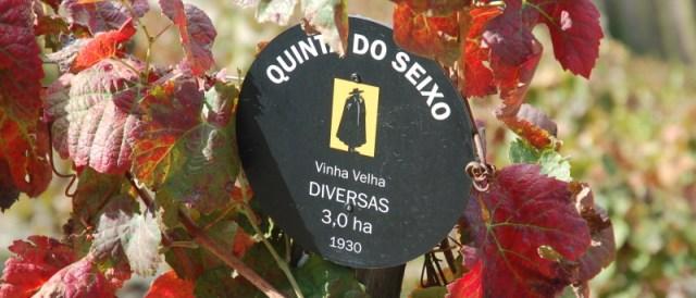 Vieilles vignes de variétés diverses