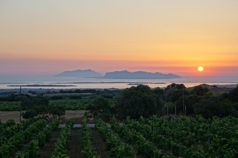Vignoble de Marsala au coucher de soleil (Photo: Haywines.co.uk)