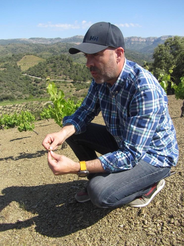 Jose Mas Barbera, de Costers de Priorat, nous explique le sol de son vignoble Mas Alzina