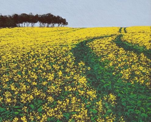 Fields of York 49cm x 49cm
