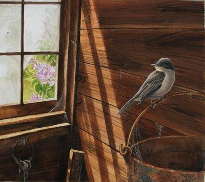 Eastern Phoebe by Julie Zickefoose