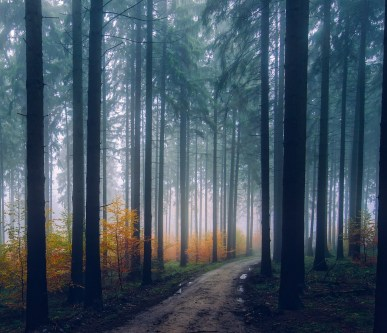 autumn-conifer-countryside-247421