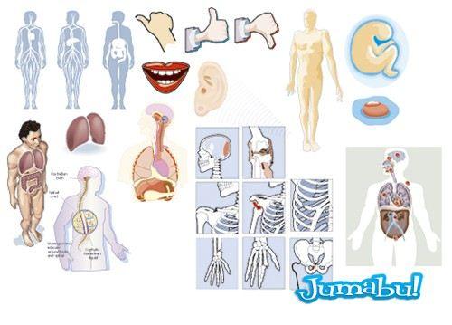 Organos del Cuerpo Humano en Vectores | Jumabu
