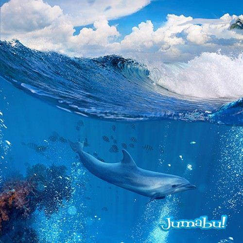 delfines-mar-nadando-saltando