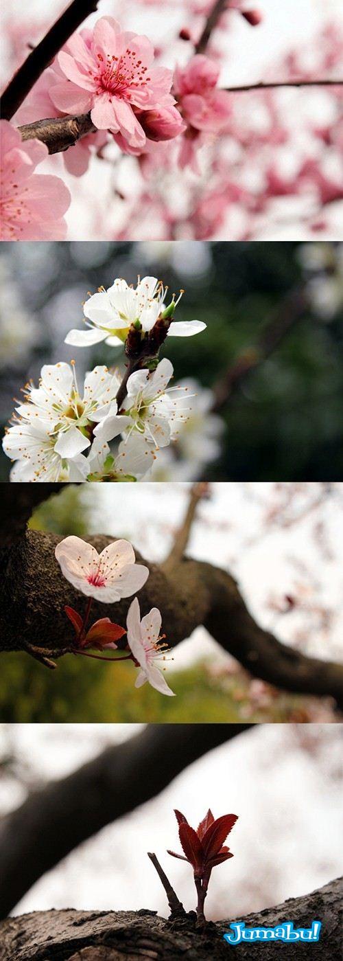 flores arboles imagenes de - Imágenes JPG de Flores y Árboles