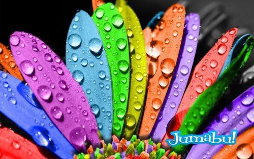 Fondo Con Flores De Colores Jumabu