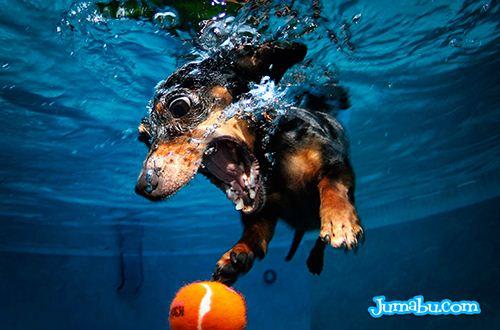 hermoso-perro-bajo-el-agua
