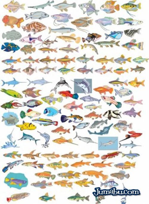 peces-en-vectores