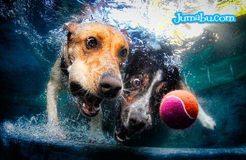 perros-amigos-pelota