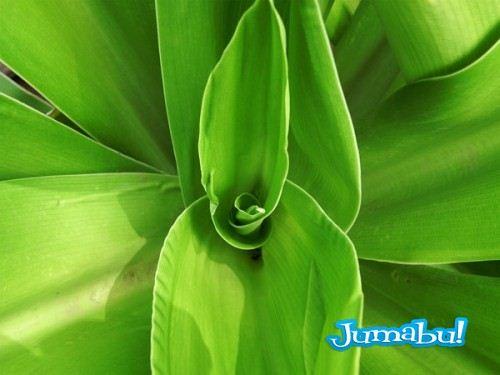 textura hojas planta arbol 500x375 - Texturas de Hojas Verdes