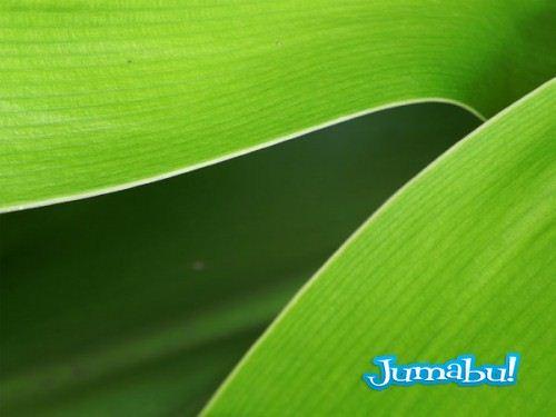textura-hojas-verdes-jpg-01