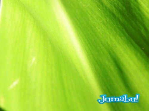 textura hojas verdes jpg 02 500x375 - Texturas de Hojas Verdes