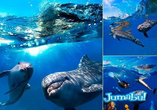 delfines-hd-imagenes-mar
