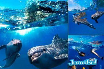 delfines hd imagenes mar - Imágenes de Delfines en Acción en Alta Definición