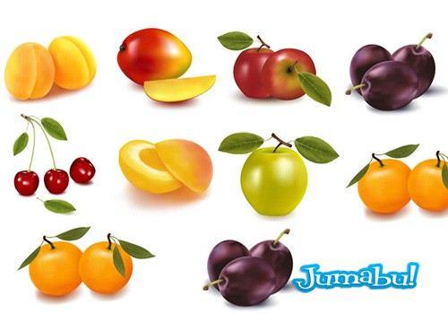 frutas-estacion-vectoriales