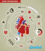 infografia-vectores-corazon-humano
