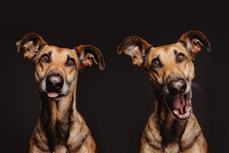 perro-mirando-costado