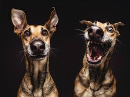 perros-caras-raras
