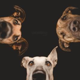 perros-graciosos