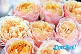 Delicate orange roses