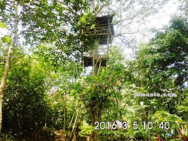 foto rumah pohon di taman kupu kupu gita persada lampung