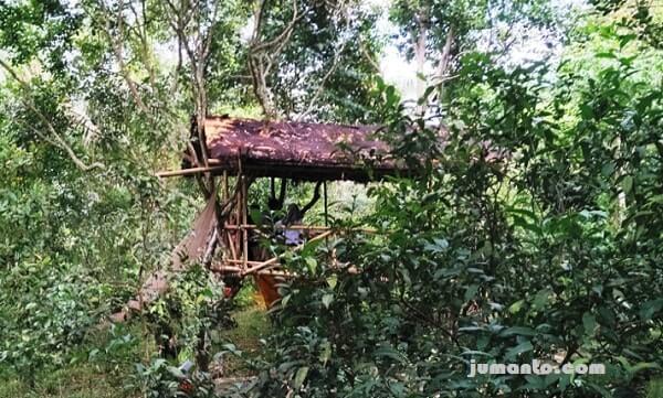 rumah pohon lebih tinggi