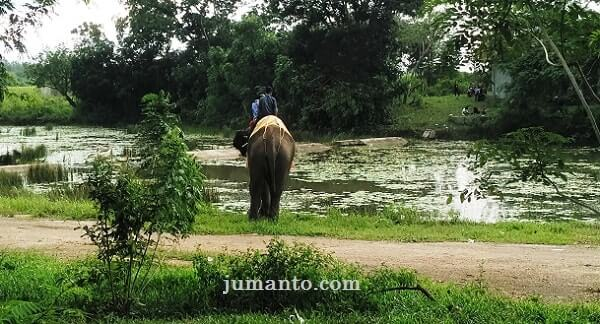 gajah way kambas minum