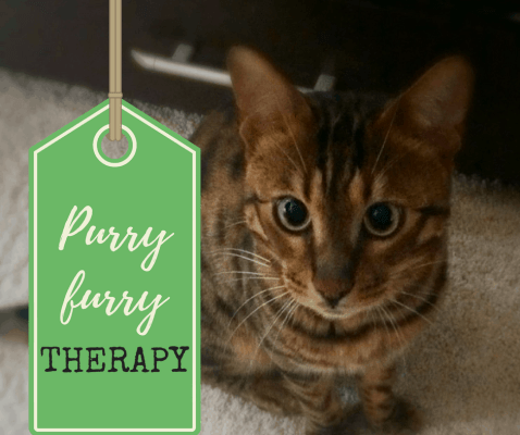 purry-furry therapy