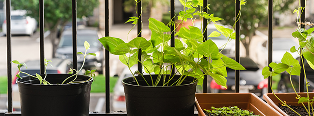 Plant herbs in your balcony