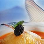shark fin food photographer Guangzhou