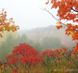 Richmond Hill in the fall On Canada by travel photography China