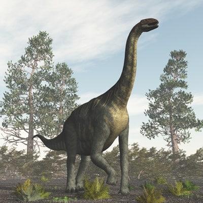 Jobaria Article Sur Ce Dinosaure