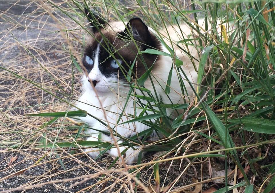 O mato e a horta – não crie dilemas- conviva