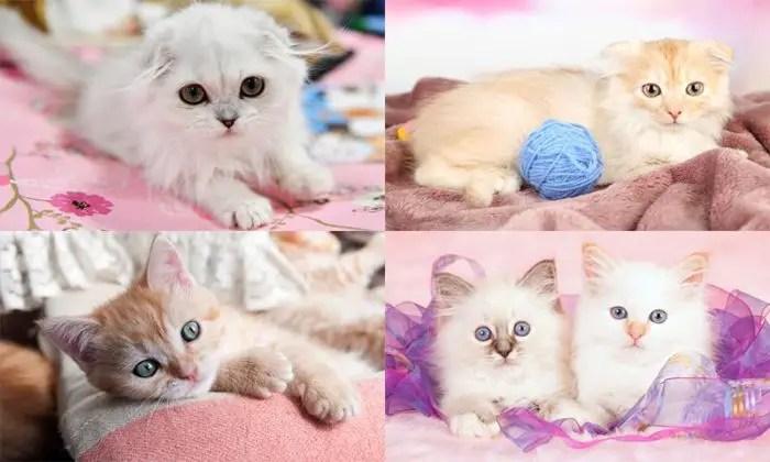 game kucing 9