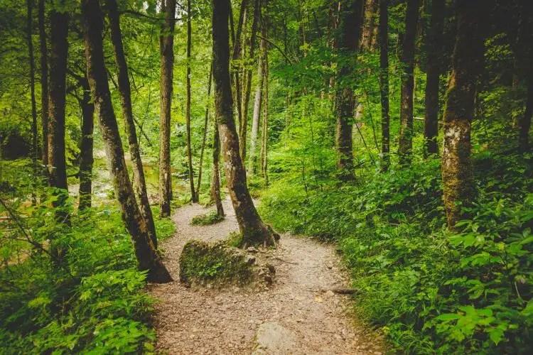 Contoh Teks Eksposisi Tentang Hutan