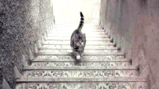pisica pe scari