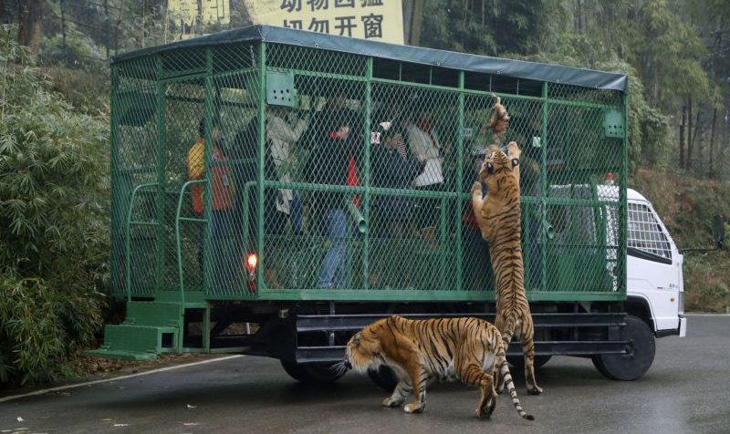 gradina zoologica Chongqing