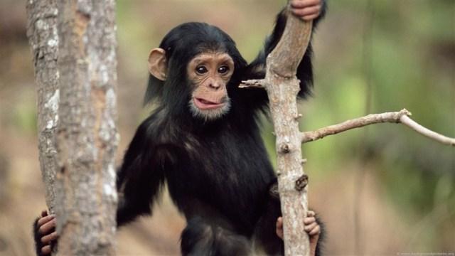 maimuta poza umor
