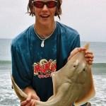 Andrew's shovel-nosed ray PB from Australia