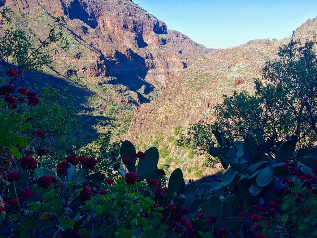 Tal im Inselinneren: Gran Canaria ist stellenweise richtig grün mit viel Vegetation. Foto: Sascha Tegtmeyer